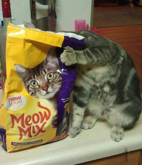 blog_imagescrazyhits.mobie.in-cat-Illusion.jpg